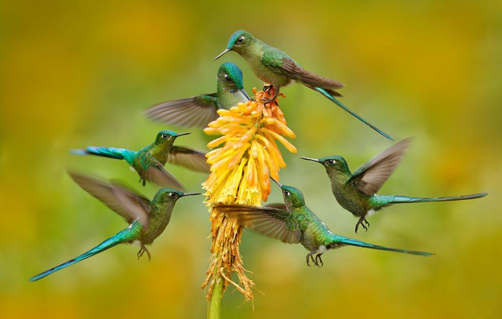 group of hummingbirds eating nectar