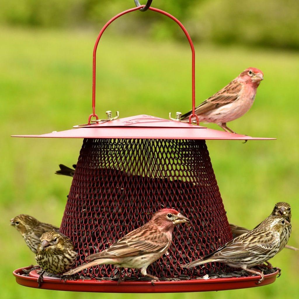 perky pet cardinal feeder