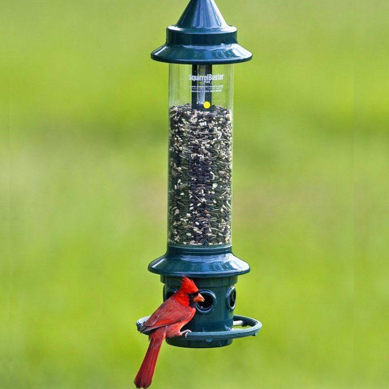 squirrel buster cardinal feeder
