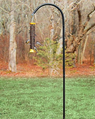 droll yankees bird feeder pole
