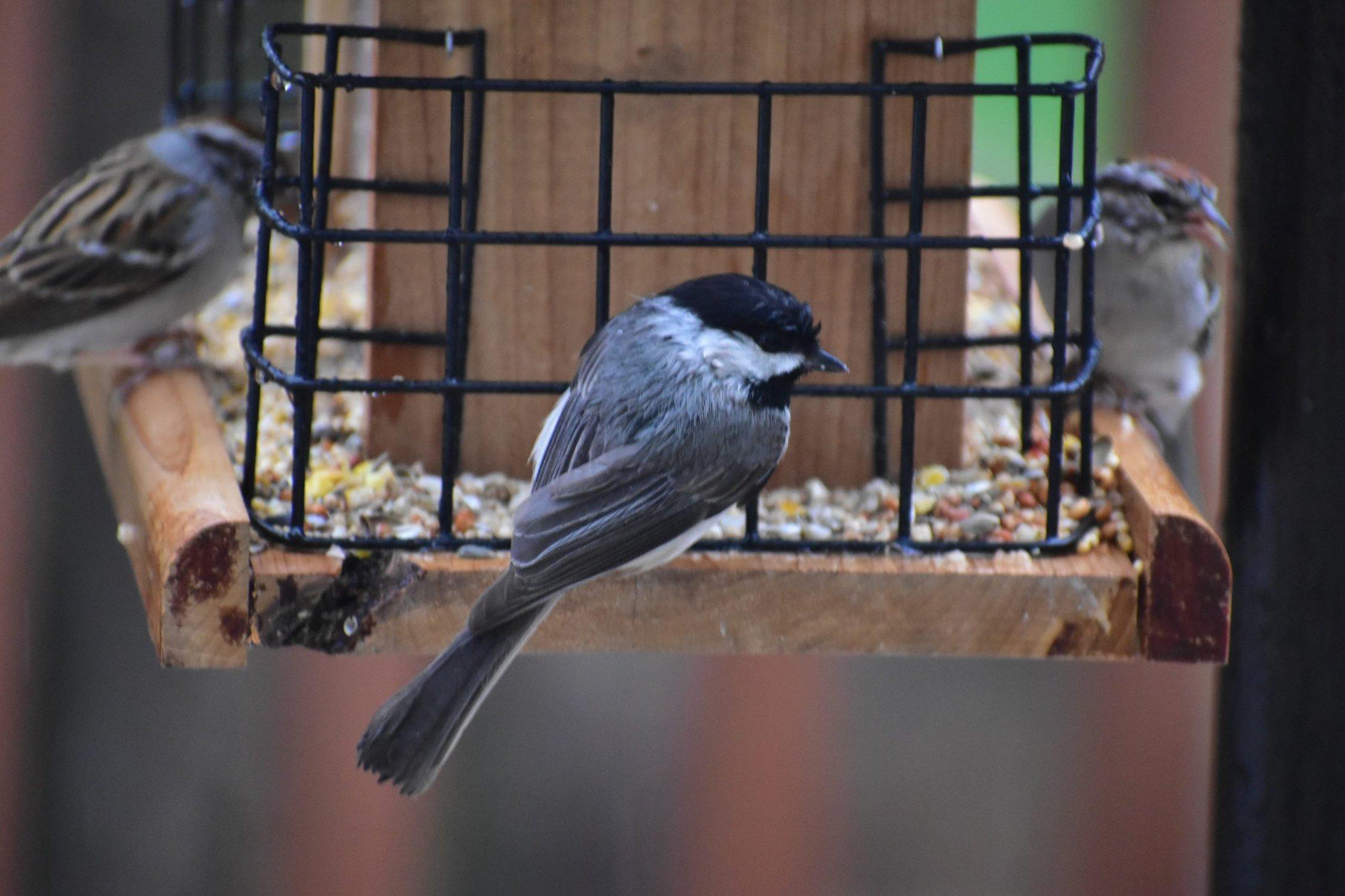 www.worldbirds.org
