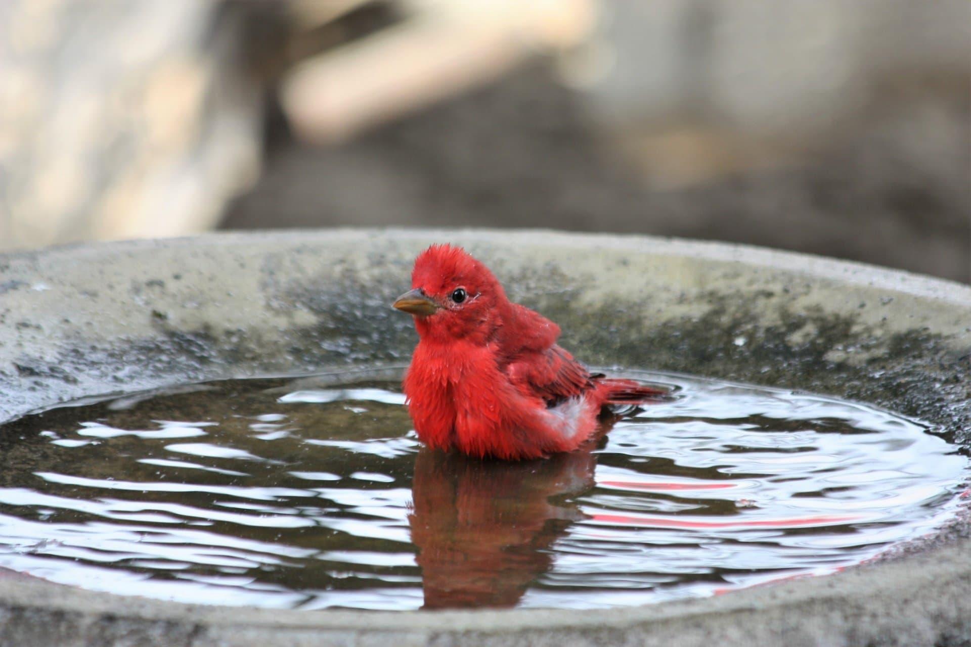 5 Best Bird Baths In 2020 Essential For Songbirds World Birds