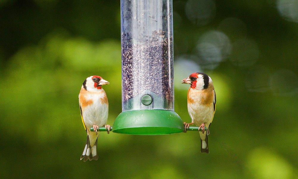 bird sitting on a bird feeder
