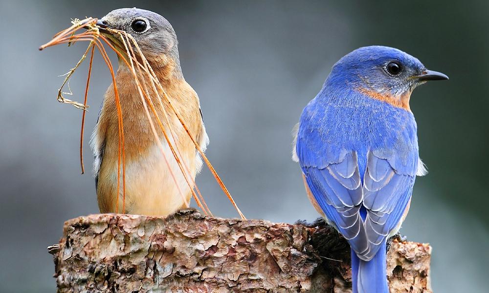 Bird Symbolism Meaning Totem Spirit Omens World Birds