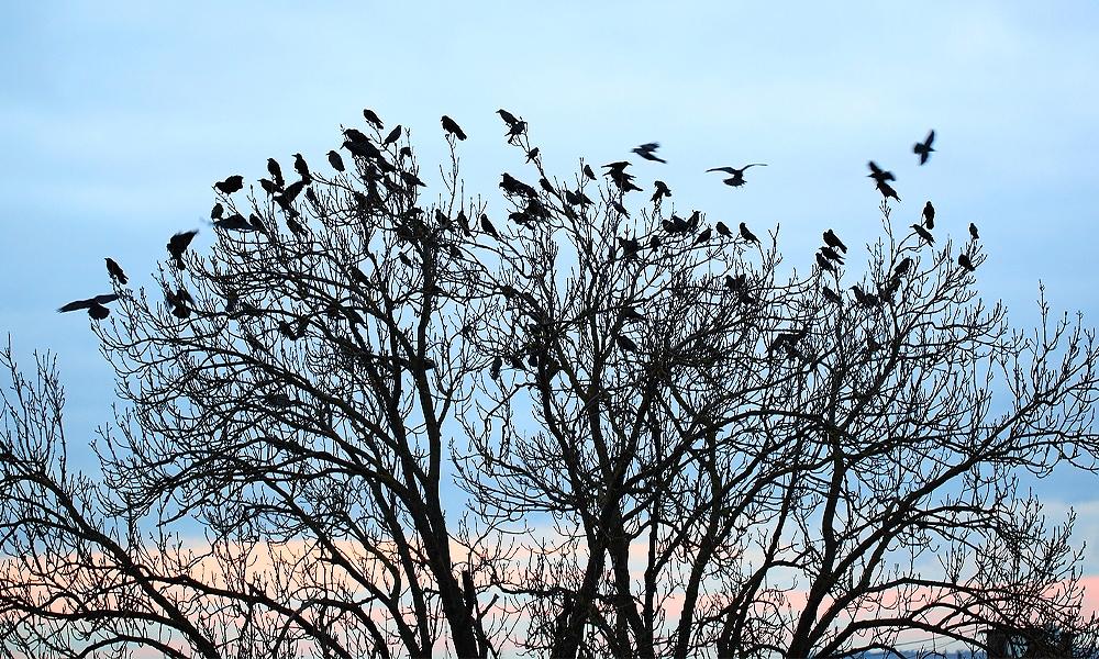 birds roosting ona tree