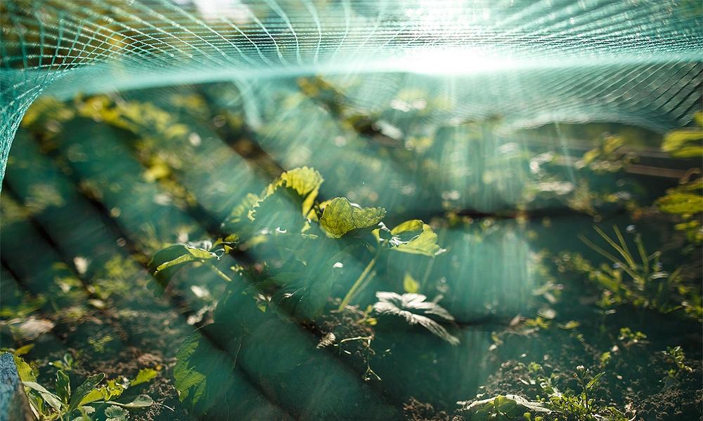 bird net on plants