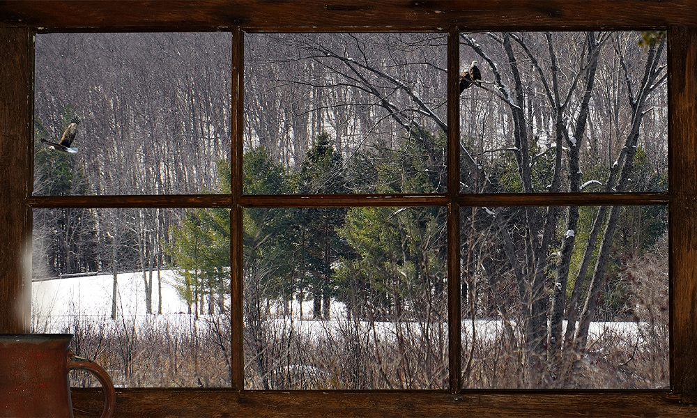 window with woods in the background