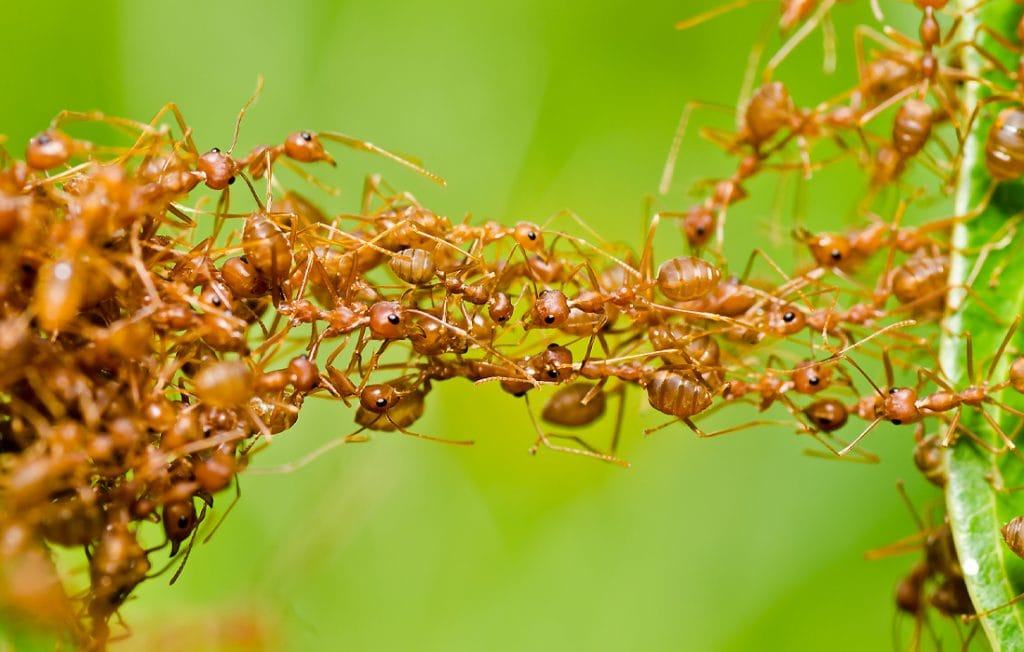 ants on a green background