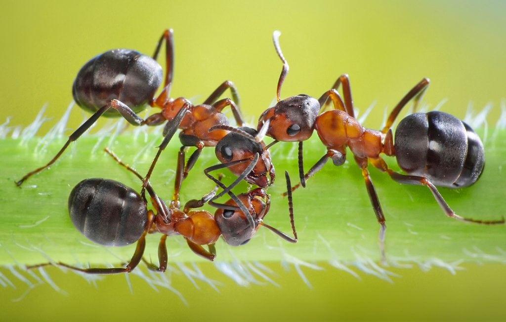 three ants on a leaf