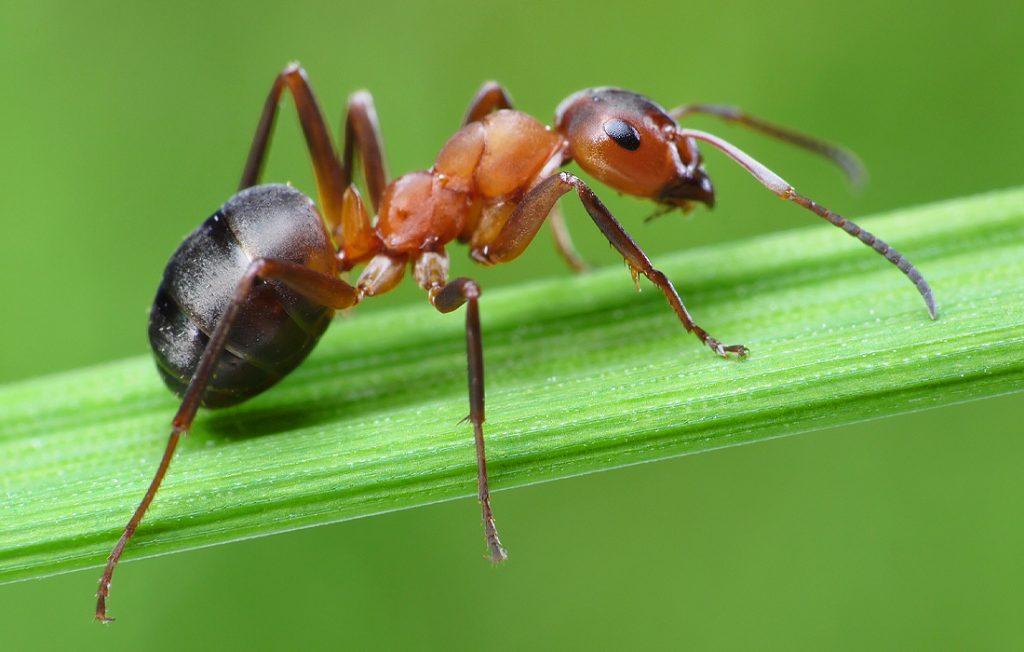 ant on a leaf