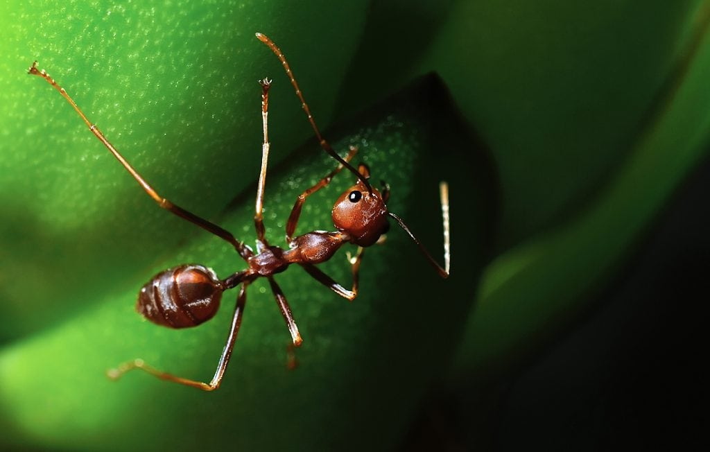 ant on a green background