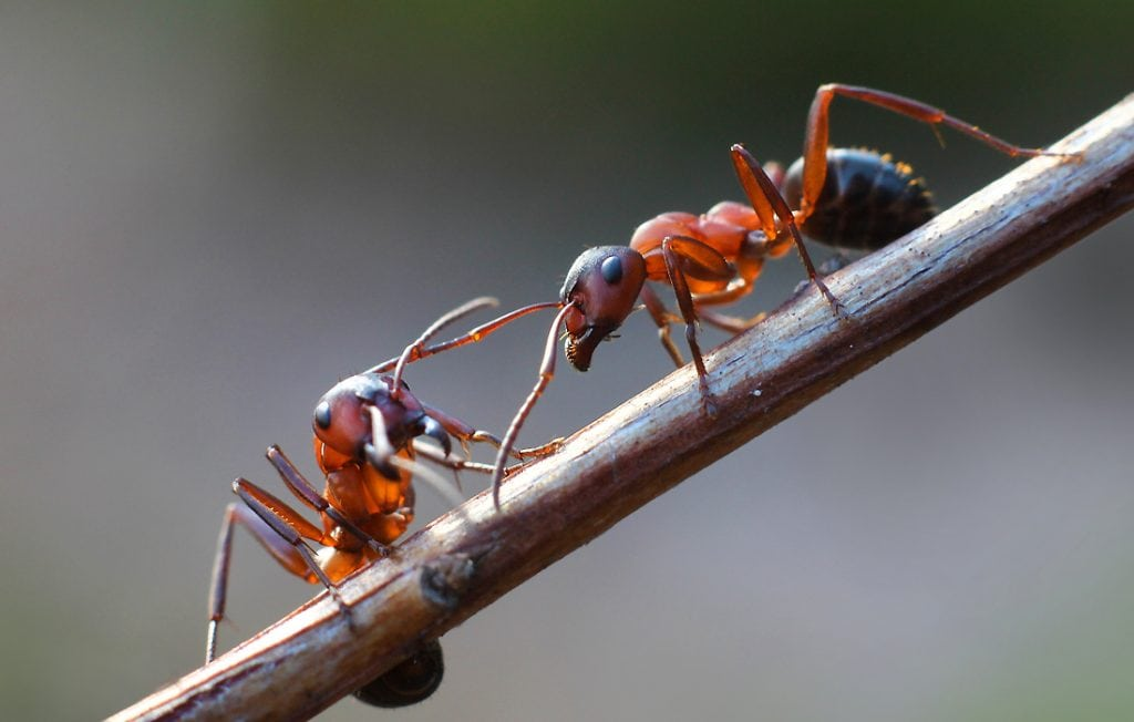 two ants on a stick