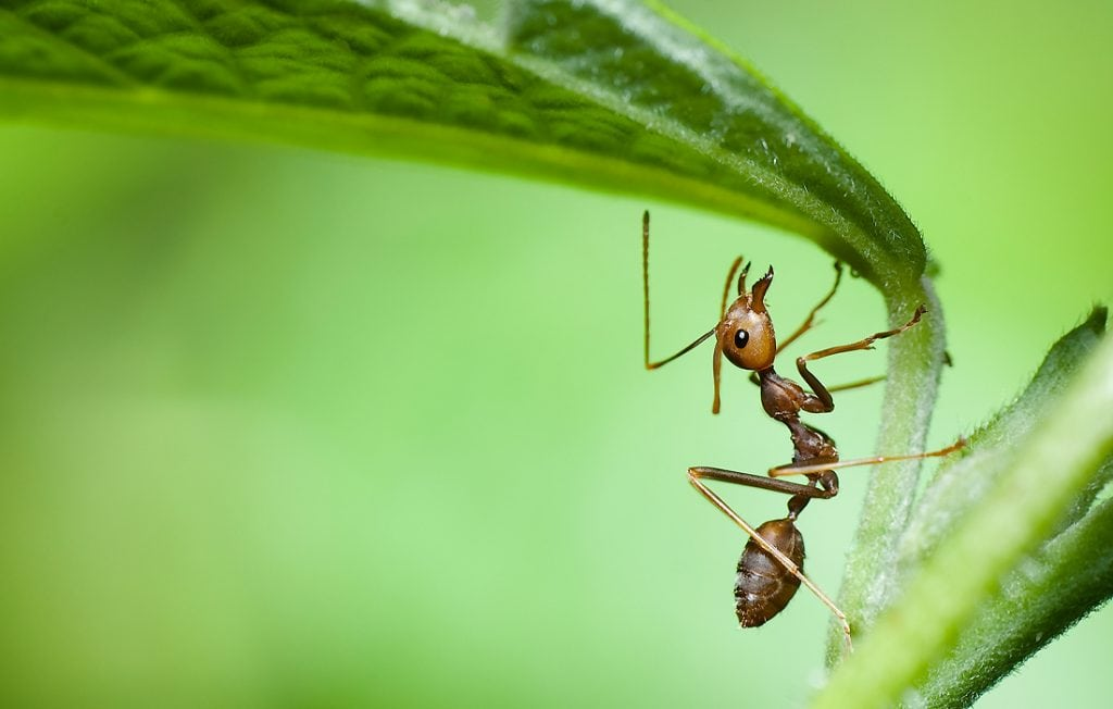 ant holding onto leaf
