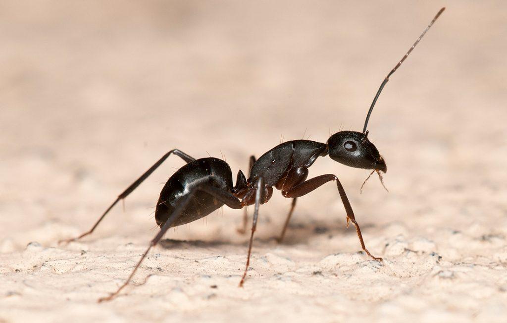 ant on ground