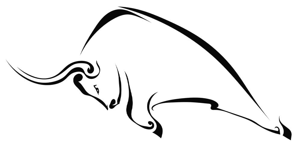 bull illustration