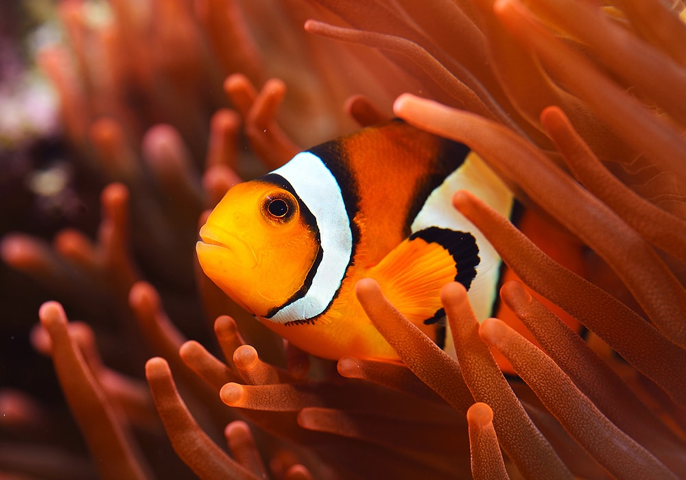 colorful fish swimming
