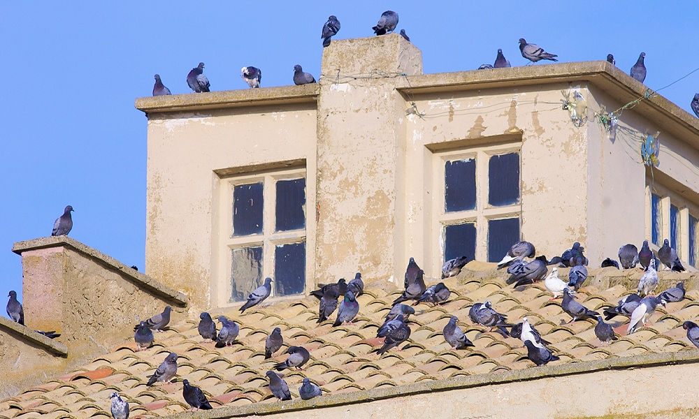 pigeons sitting on a roof