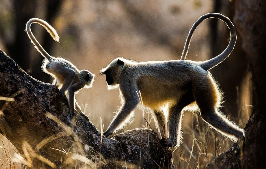 two monkeys on the ground