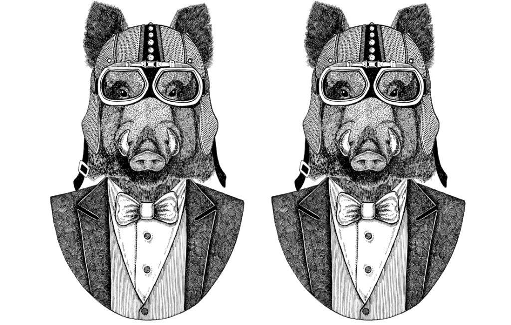 illustration of a pig head