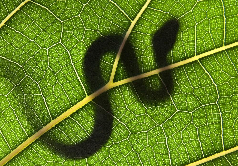 snake on a leaf