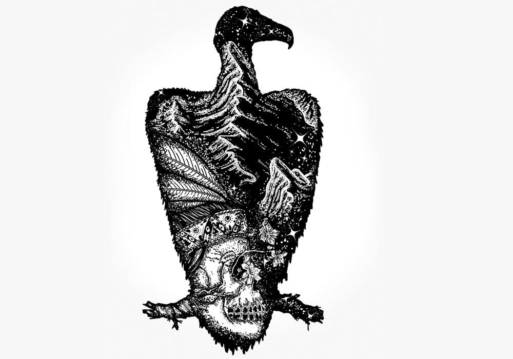 vulture illustration