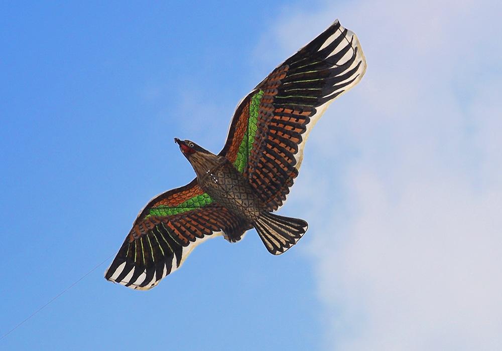 flying kite with bird design