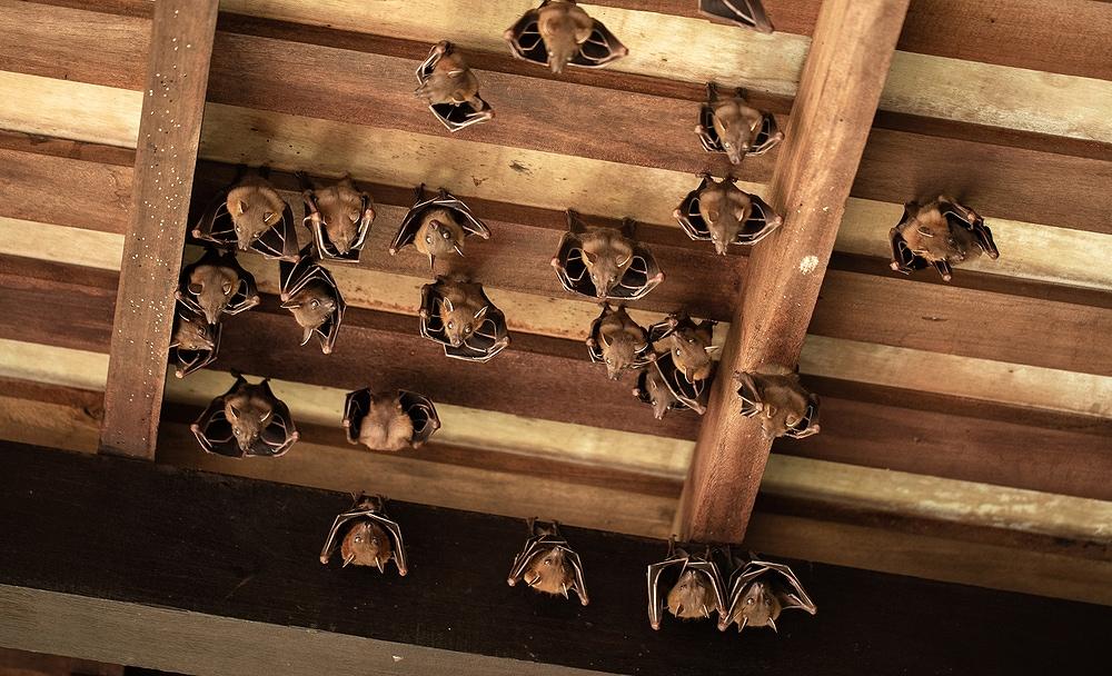 attic with bats