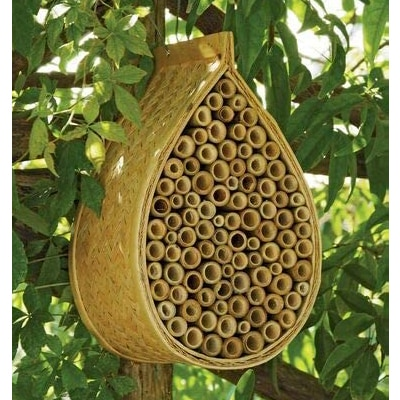 beehive in the nature