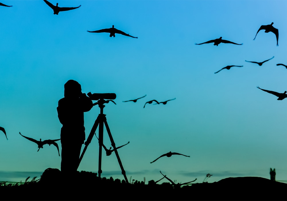 silhouette of a man with optics looking birds