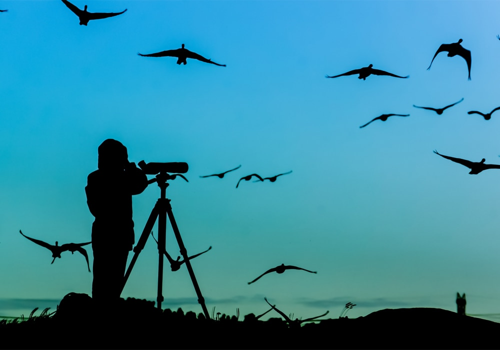 bird photographer silouhette