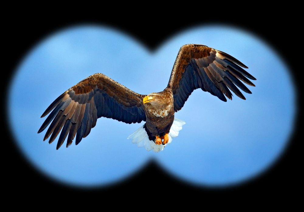 image of an eagle through binoculars