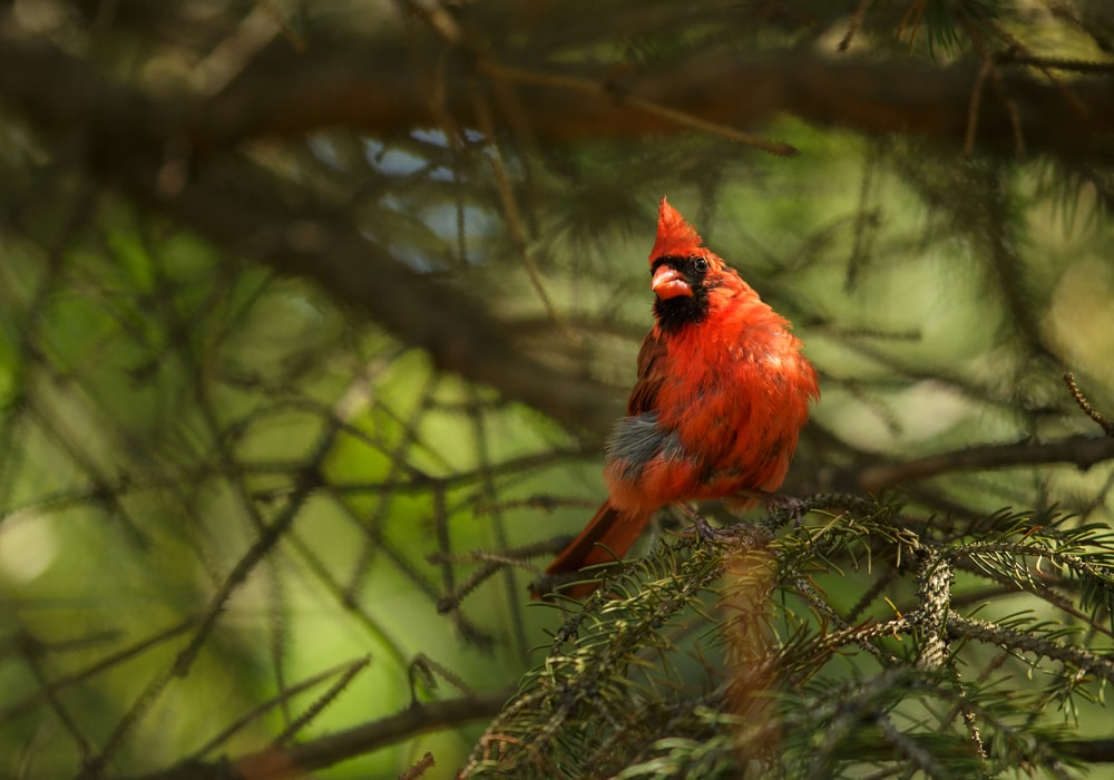 bird in nature