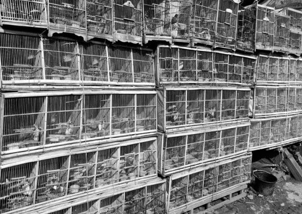 Caged birds at Indonesia's biggest bird market