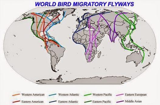World Bird Migratory Flyways